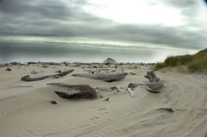 Coastline by icelander66