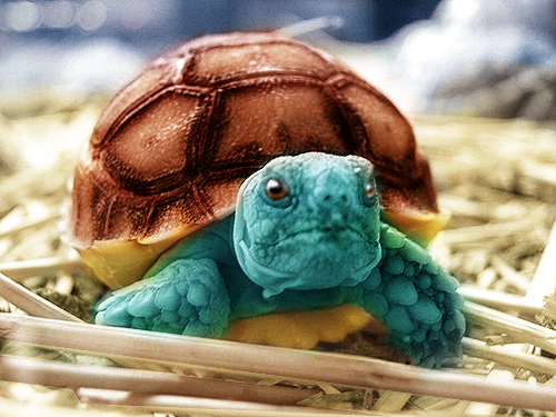 Real Life Squirtle by LiAM-S on DeviantArt