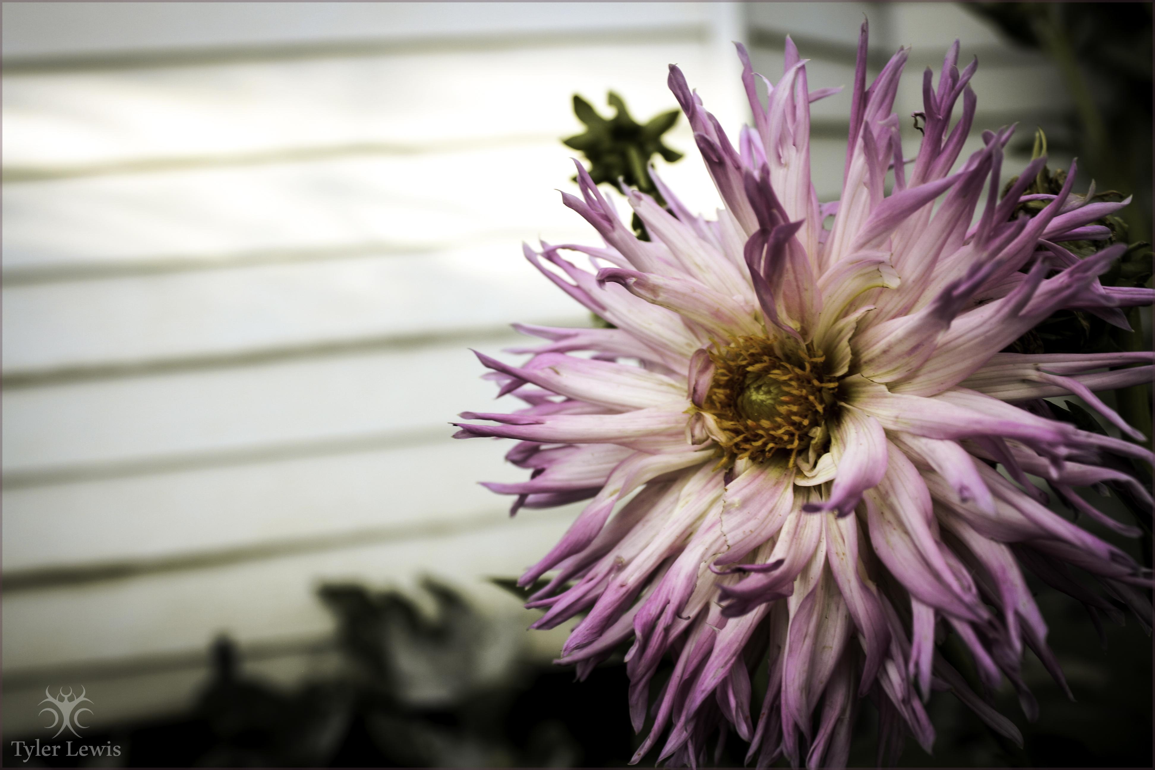 Flower Power by TylerLewis on DeviantArt