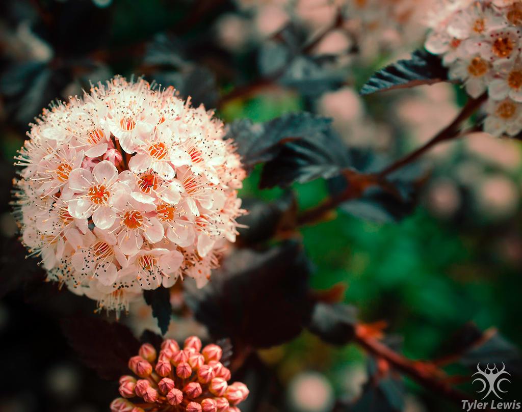 Untitled Flower by TylerLewis on DeviantArt