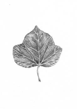 Leaf _ sketch