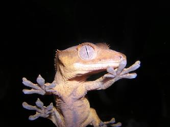 My Gecko by leoleo586