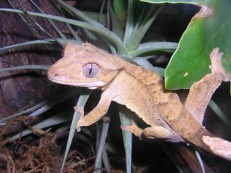 Gecko by leoleo586