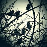 CLXXIX. ..birds
