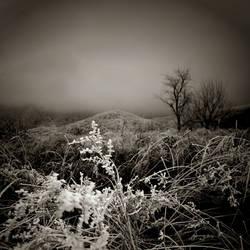 CCXLVII. ..land of silence I. by behherit