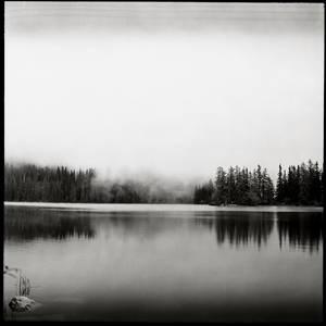 Forest of equilibrium - P6