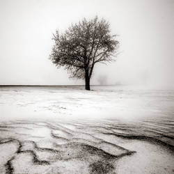 CCCXXI. ..Desolate Winter
