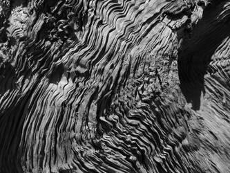 Washed out cedar by MuzunguMbaya