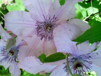 Paper Tentacle Flowers