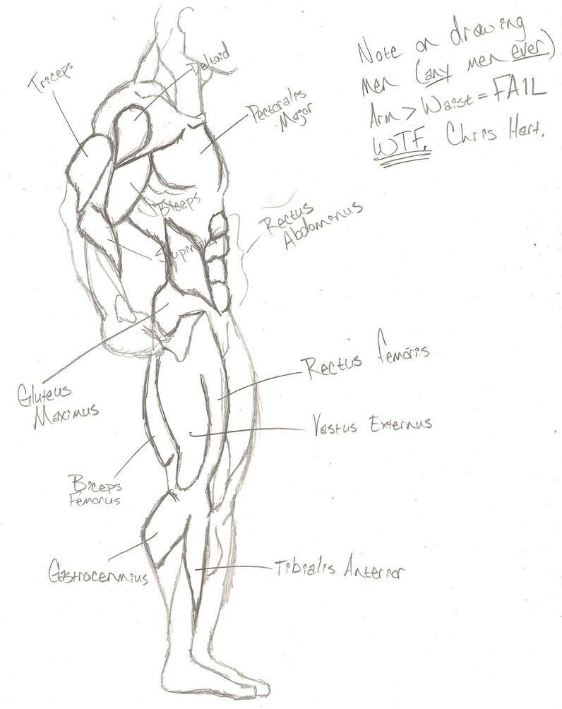 Superhero Anatomy: Side View by NnylFets on DeviantArt