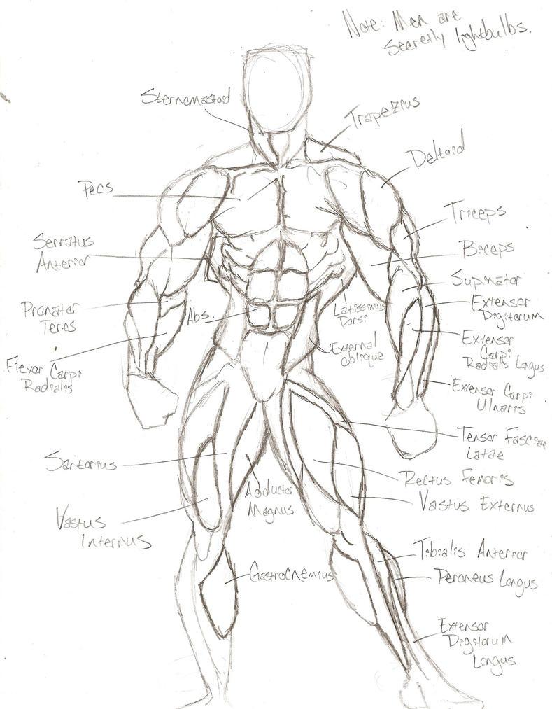 Superhero Anatomy: Front View by NnylFets on DeviantArt