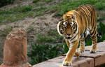 Animal Kingdom 318