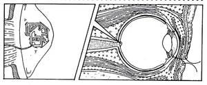 Microchipped optic nerve