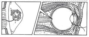 Microchipped optic nerve by Grebo-Guru