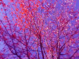 Dreamy Leaves by meiyue