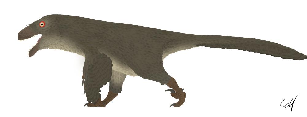 Utahraptor ostrommaysorum by sphenaphinae