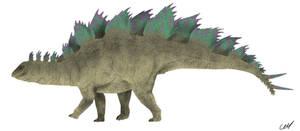 Stegosaurus stenops 2.0