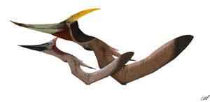 Pteranodon longiceps 2.0