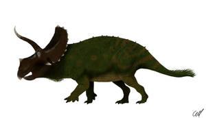Eotriceratops xerinsularis