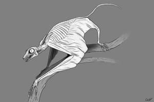 Galeopterus