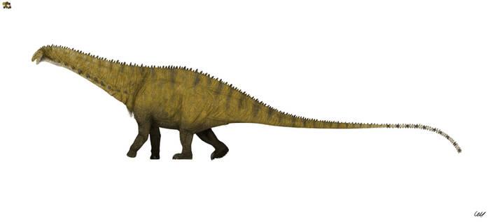 Apatosaurus louisae