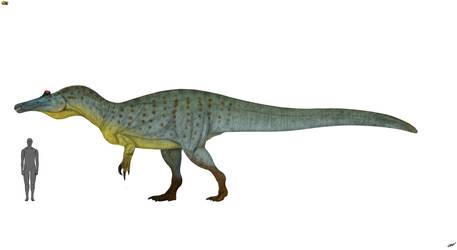 Suchomimus tenerensis 3.0