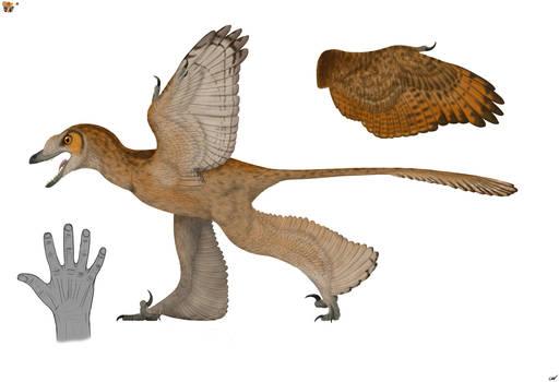 Sinornithosaurus millenii 2.0