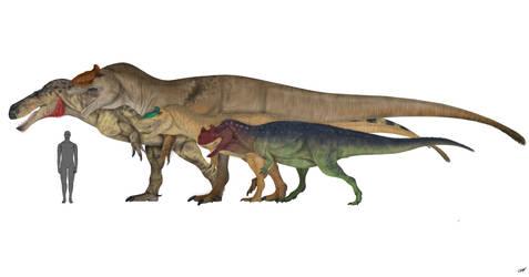 Morrison Size Comparison