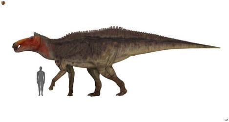 Shantungosaurus giganteus 2.0