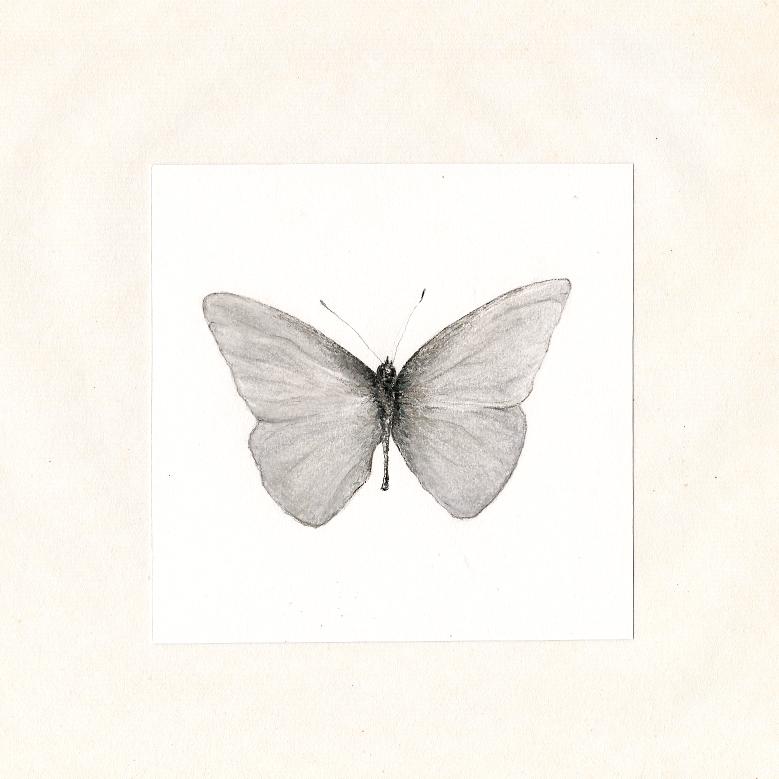 appias albina by DISC-ERR0R