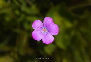 Simplicity by SasoSi