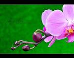 Spring colors by SasoSi