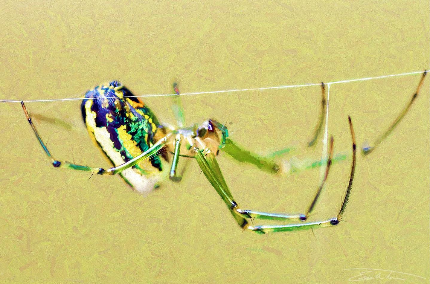 Tiny Green Spider by eccoarts