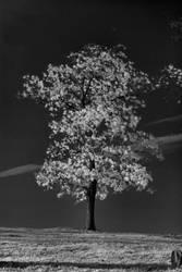 IR Tree by Maetz