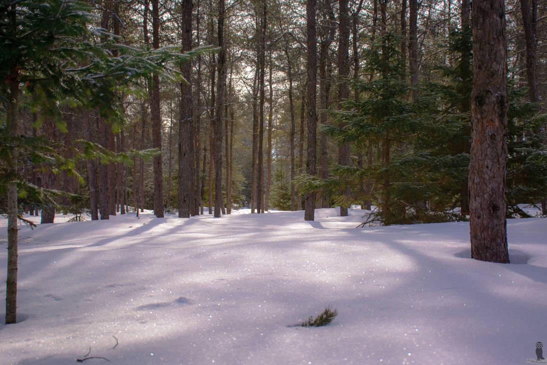 Canadian Wilderness by OwlFeatherPhotos