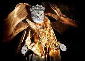 Kitty.... The Queen by PLDmedia