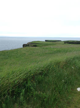 Island Field Stock