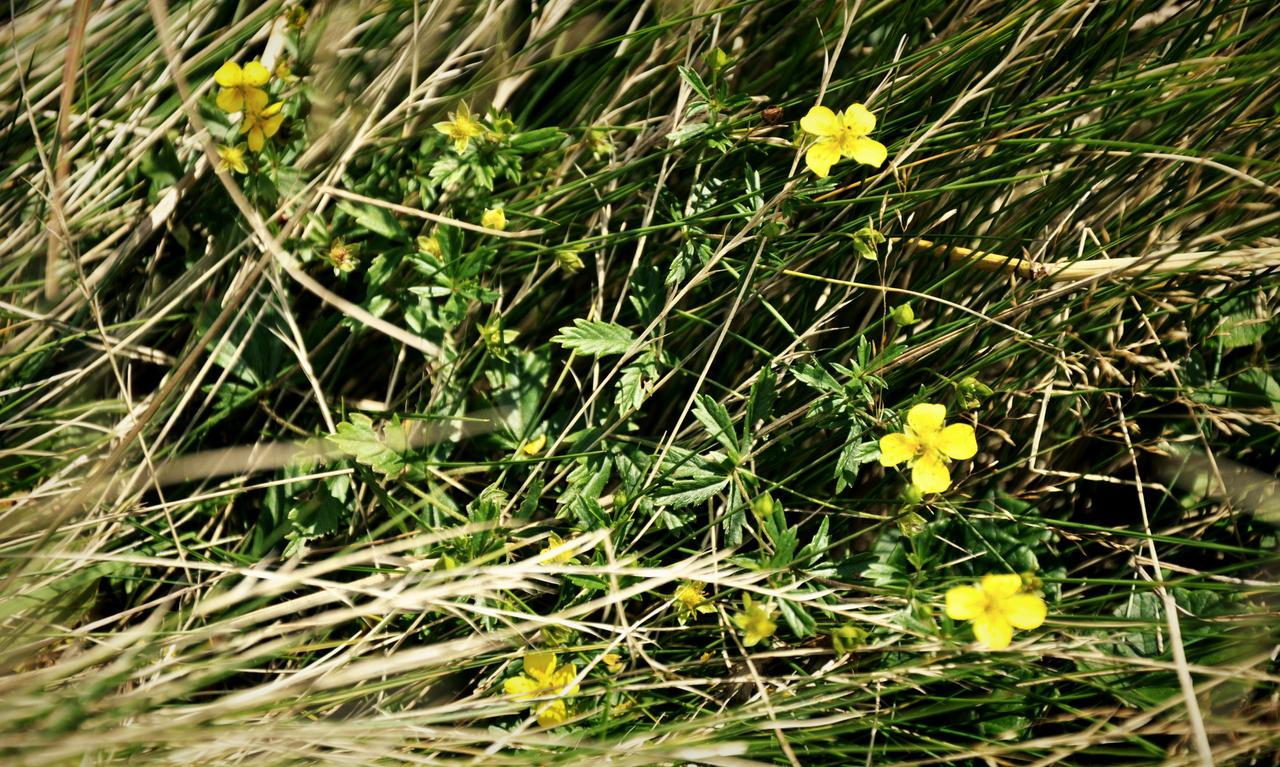 Flowers by tuja-in-wonderland