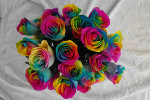 Rainbow Roses II