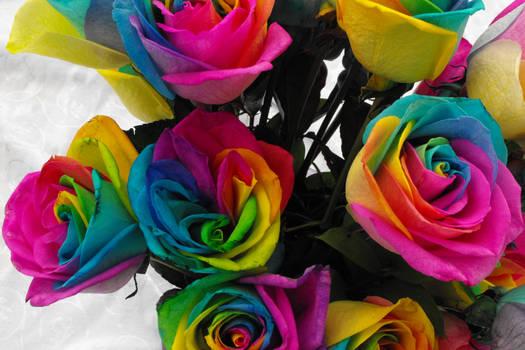 Rainbow Roses III