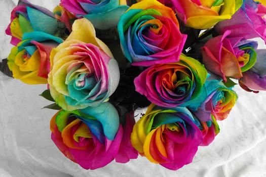 Rainbow Roses V