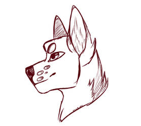 Wolf Sketch. by Soulfrost11