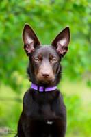 Puppy posing by miatadaa