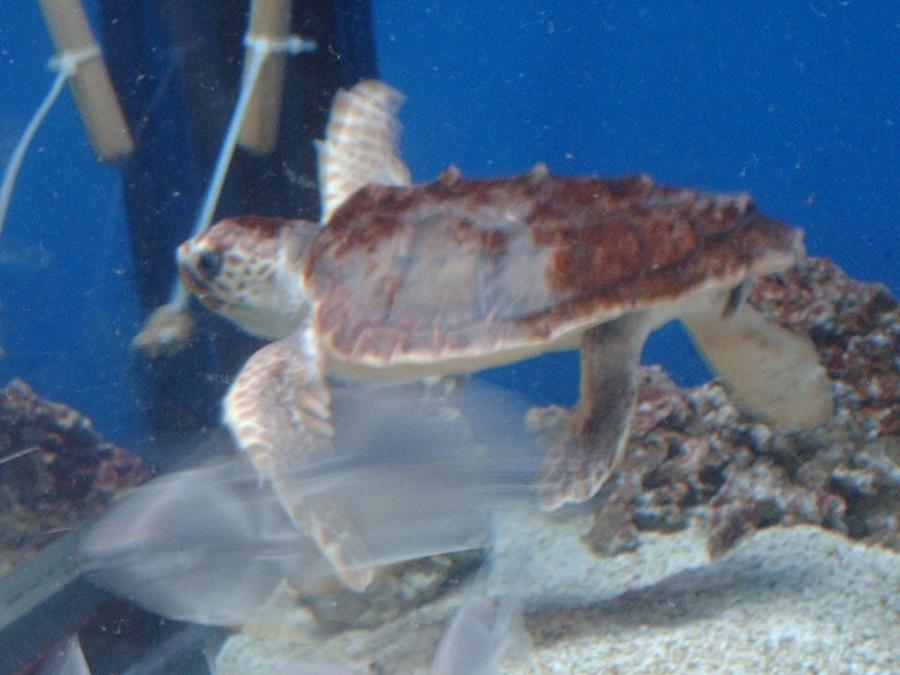 Sea Turtle by 3600LetGo