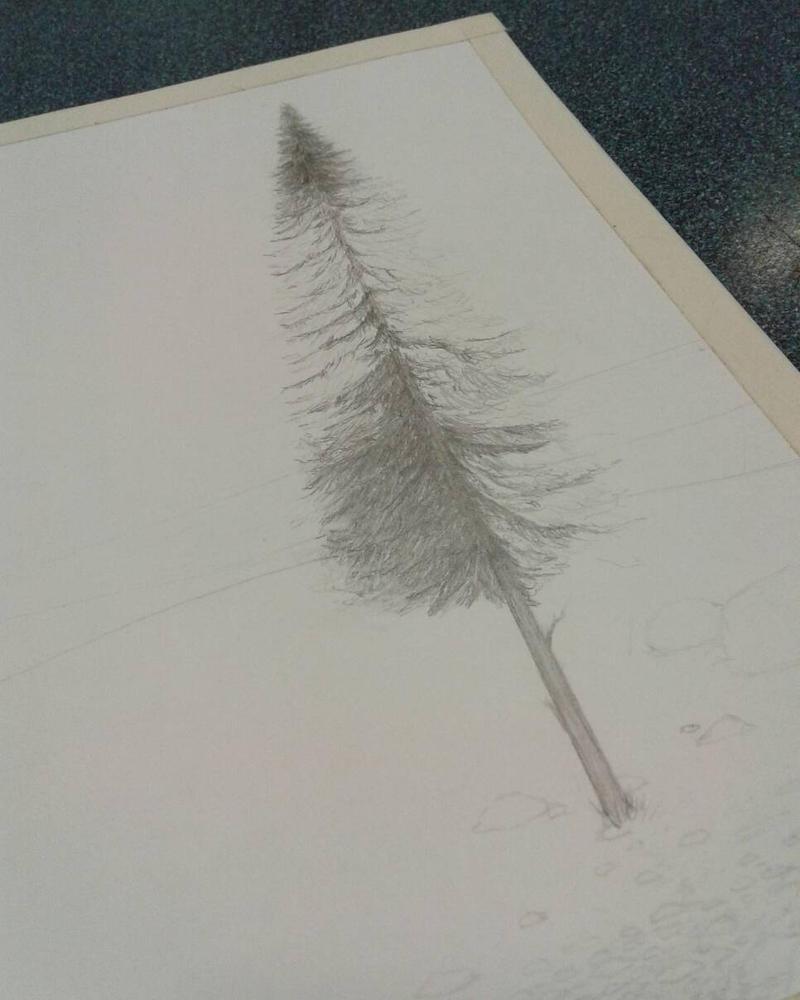 This pine tree by ArtByRandy