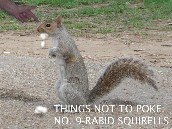 TNTP: Rabid Squirrels by neon-vyper on DeviantArt
