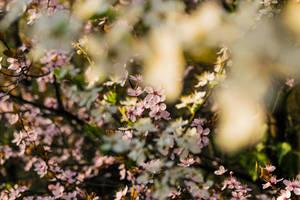 Spring Bloom by DigitalSys