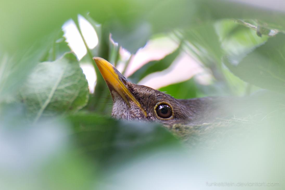 Beak-Peekin by Funkelstein