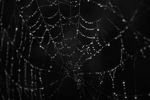 Spiderweb in the Morning by Dimentichisi