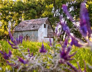 Julys Meadow
